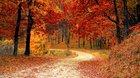 Autumn [1920x1080]