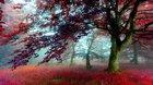Besten Natur Hintergrundbilder[1920×1080]